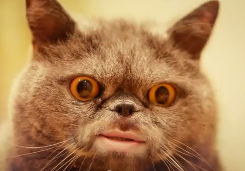 Cats With Human Mouths