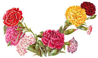 flower carnation botanical artwork old illustration digital