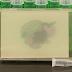 Bactérias E.coli sensíveis à luz pintando quadros coloridos!