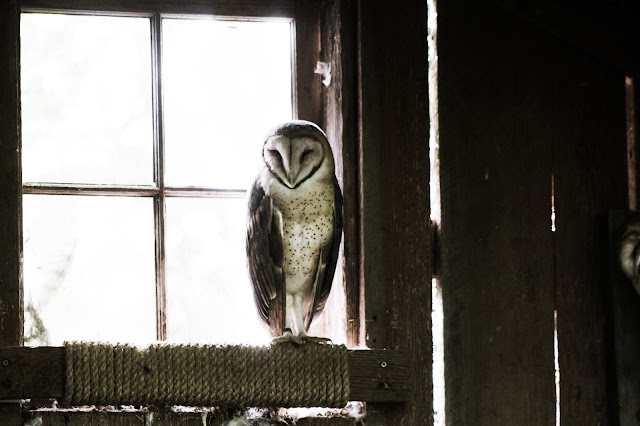 photo of owl photo credit :: https://unsplash.com/@cliff_77