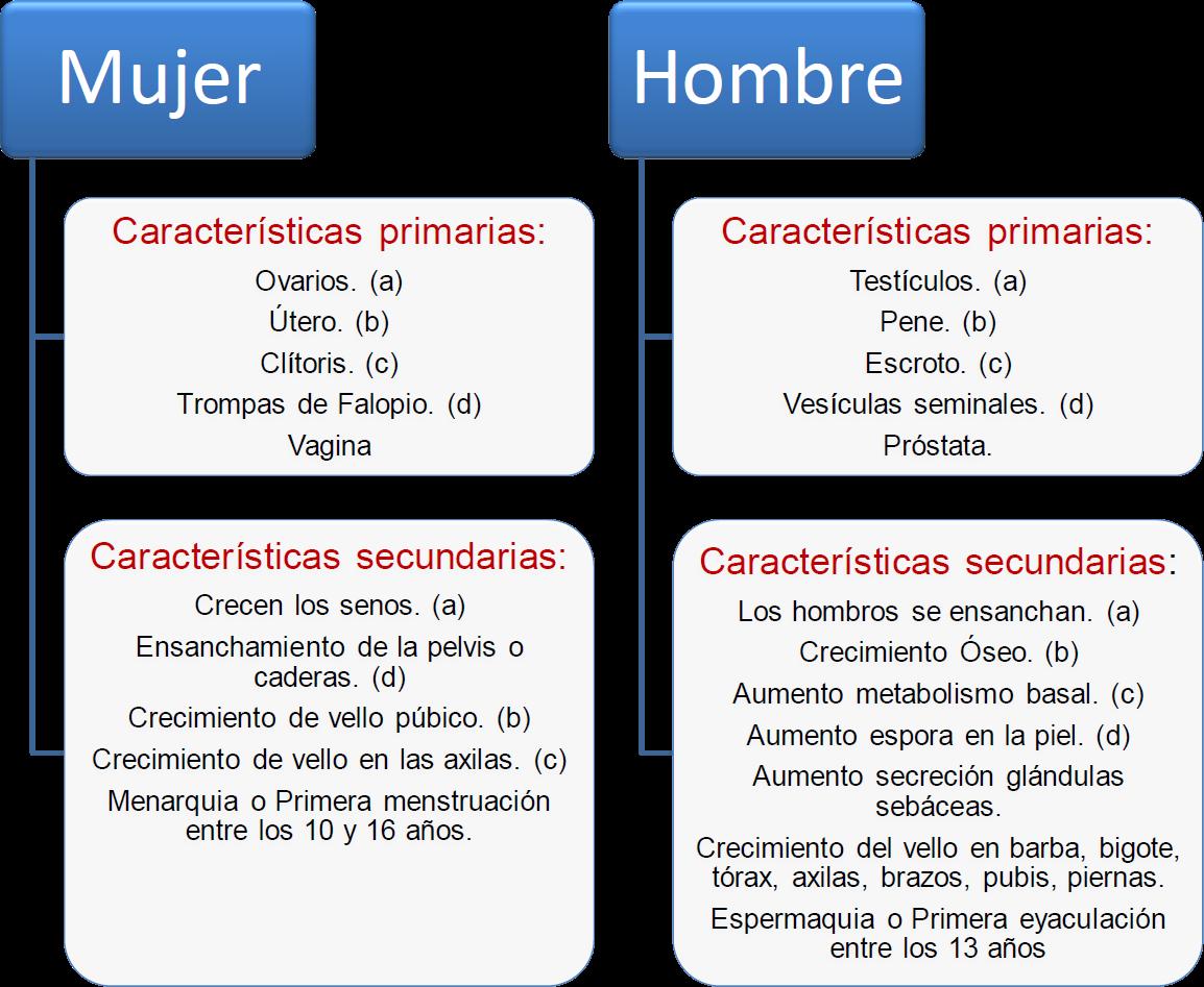 diferencias fisicas y mentales entre hombres y mujeres