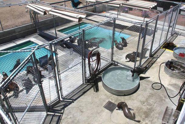 Visita ao Pacific Marine Mammal Center em Laguna Beach