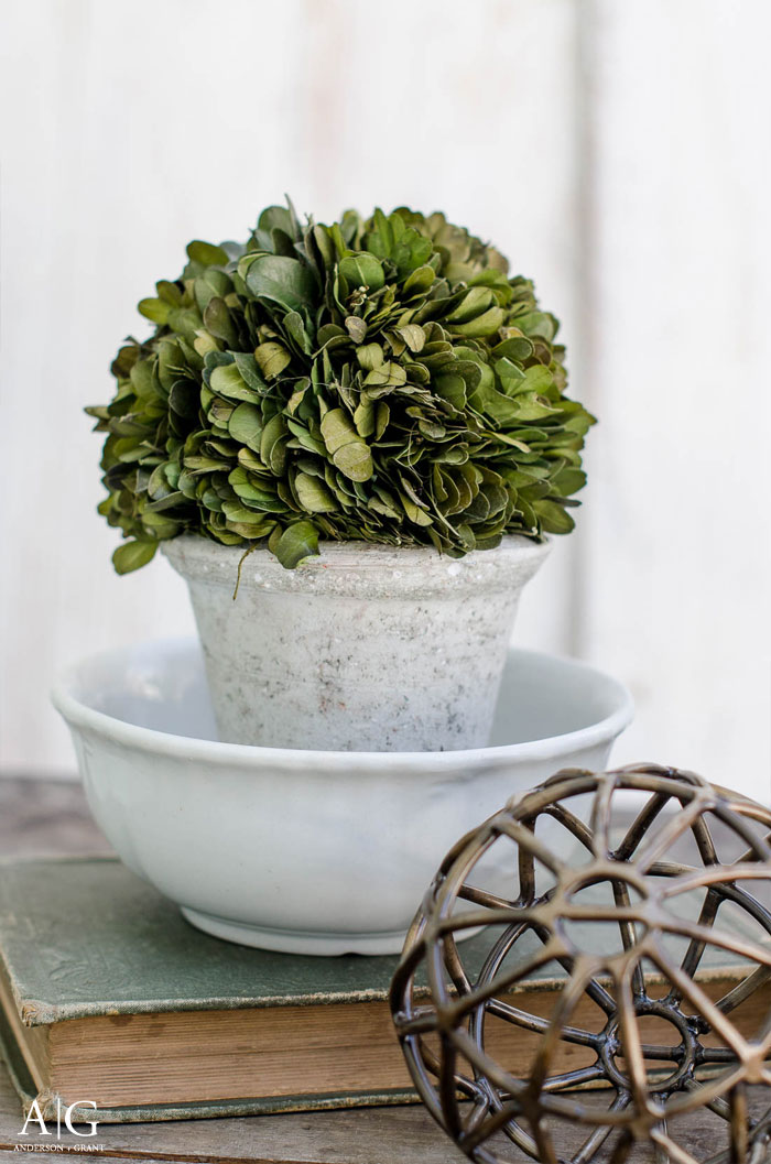 Add a boxwood topiary to an ironstone bowl for instant style in your home.  |  www.andersonandgrant.com