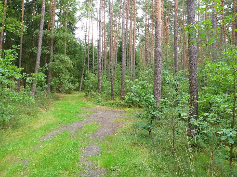 Лес, дорога,