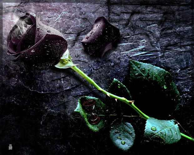 20 Blood Rose Gothic Art Pictures And Ideas On Meta Networks