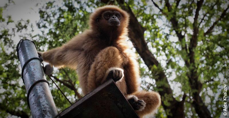 Грустная обезьяна