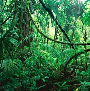 Kondisi Hutan Hujan Tropis