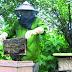 Trang trại nuôi ong mật sữa ong chúa ở Bảo Lộc, Di Linh, Đức Trọng - Lâm Đồng