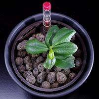 nawóz do uprawy hydroponicznej