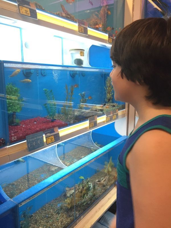 Image The Argument About Betta Fish Food Petsmart