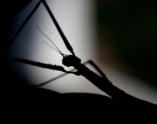 Existe un grupo de insectos sociales que  mantiene el equilibrio en la tierra y hace  que los ecosistemas funcionen en toda su  plenitud y equilibrio. Sin estos insectos el  equilibrio se pierde.