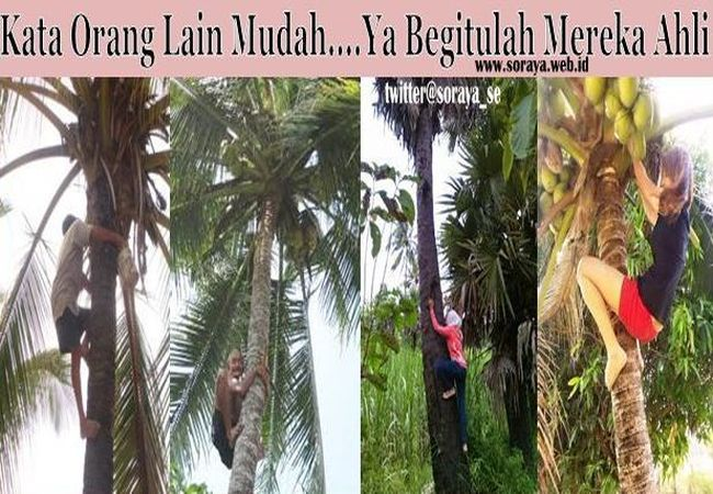 wanita bisa panjat kelapa seperti pria