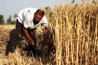 حركة مصر أحلى تفتخر بالقرار الخاص بضبط المتلاعبين في ملف القمح
