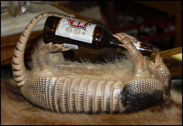 Latest Funny Pictures Funny Armadillos