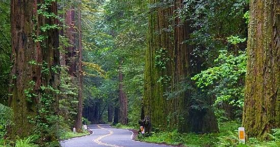 Redway Ca Avenue Of The Giants California Road Trip