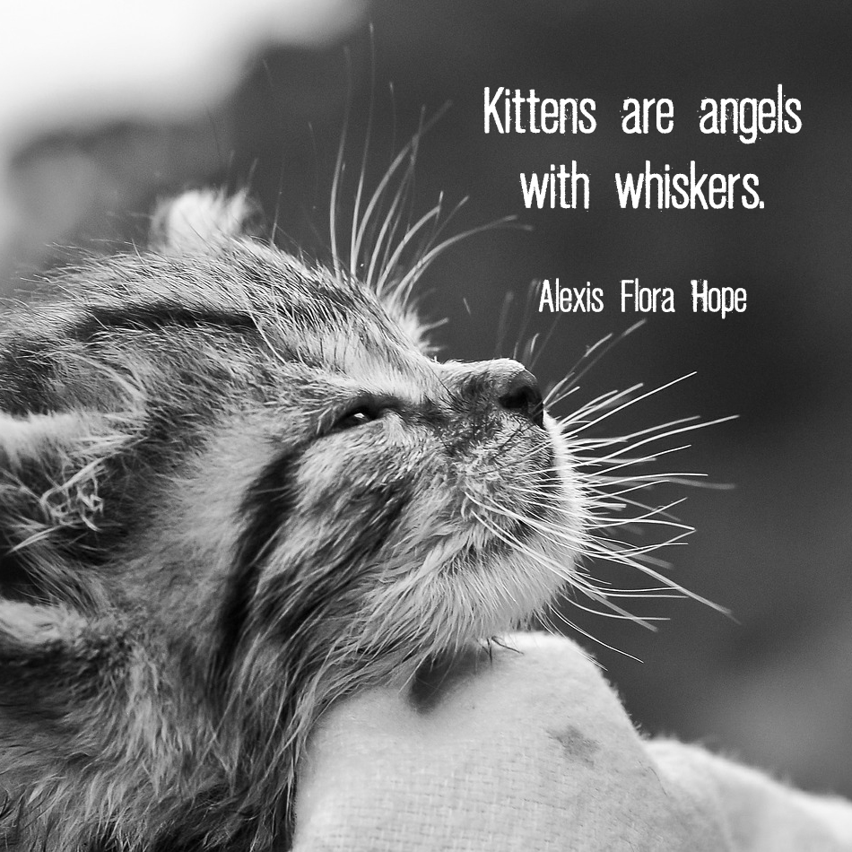 "Patting kitten with quote ""Kittens are angels with whiskers"". - Alexis Flora Hope"