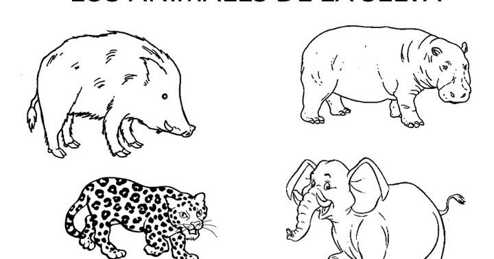 Cuentosdedoncococom Animales De La Selva Para Colorear Para Niños