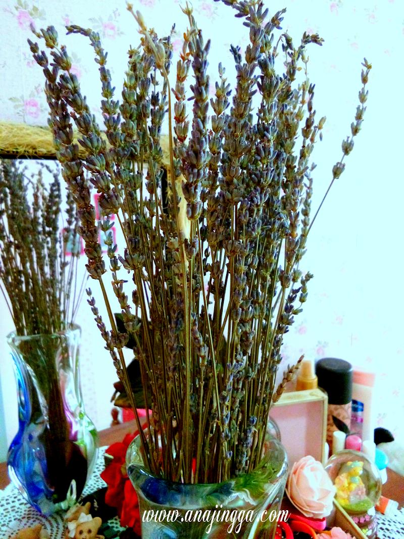 PEGASUS FLORIST - Syurga Bunga Lavender