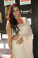 Prajna Actress in bhackless Cream Choli and transparent saree at IIFA Utsavam Awards 2017 012.JPG