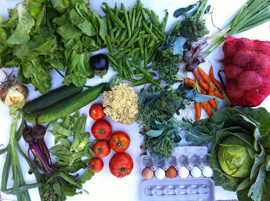 Week 9, Swore Farms CSA 7/18/14