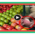 TAMIL VIRAL VIDEO - Most apples in the US drenched with chemical banned in Europe