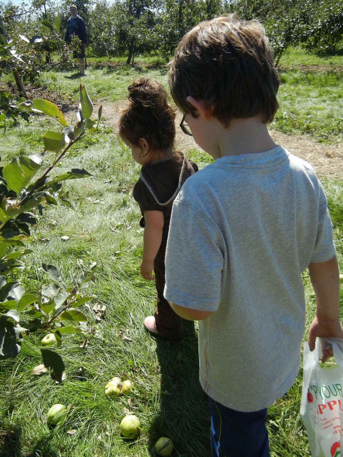 A Visit To The Apple Orchard Family Fall Activities At Home