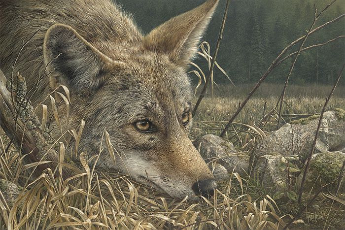Coyote Attacks On Humans http://getstephen.blogspot.com/2011/04/coyote ...