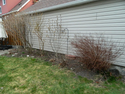 Dorset Park Scarborough Toronto back yard garden makeover before Paul Jung Gardening Services