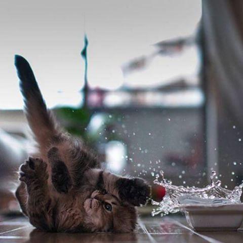 Kedi Yara Bakımı