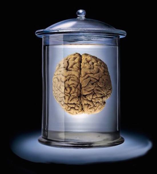 Otak dalam tong