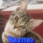 http://animaux76.blogspot.fr/2014/07/razmo.html