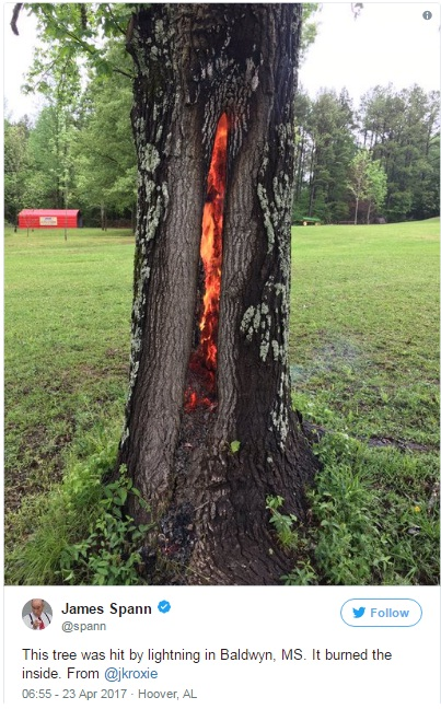 Mysterious Tree Burned From Inside