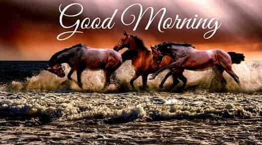 good morning nature image with horse
