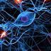Ini yang Terjadi Pada Otak dan Tubuh Saat Berpuasa