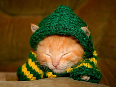 Imagenes de gatos duendes