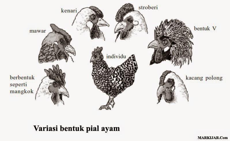 Keanekaragaman Gen, Biologi Keanekaragaman Hayati, keanekaragaman hayati indonesia.