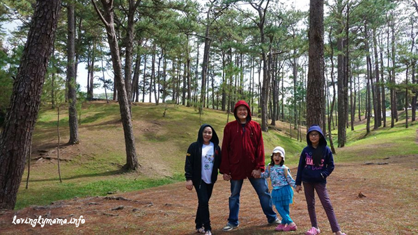 Baguio City - pine trees - Camp John Hay