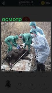 на земле лежит мертвое животное и врачи производят осмотр