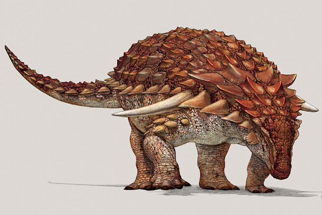 Despite heavy armour, new dinosaur used camouflage to hide from predators