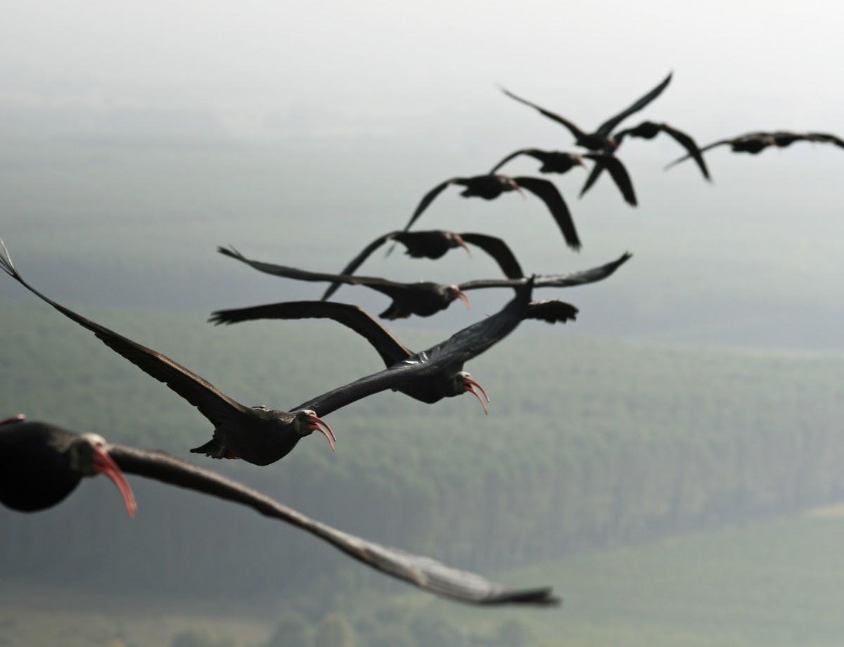 ο κύριος Μάρκους μεγάλο πουλί