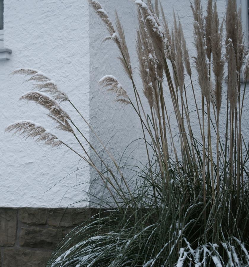 Blog + Fotografie by it's me! - Draussen - Frau Frieda sucht Schnee, Pampasgras mit Schneehaube