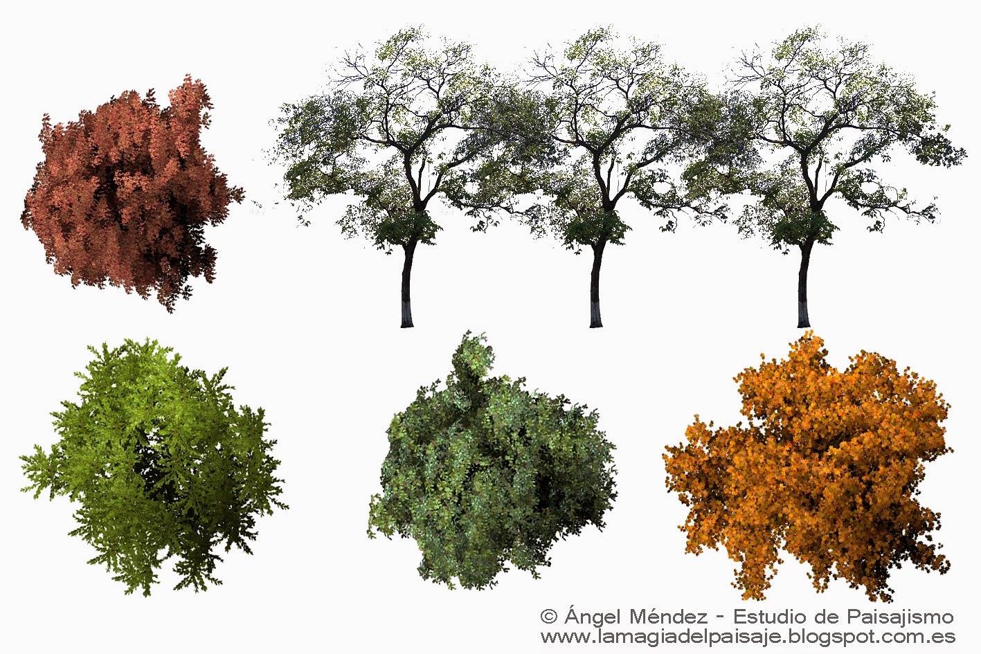 Diámetros de las plantas