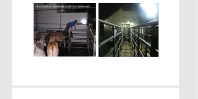 proses penggiringan ternak di RPH
