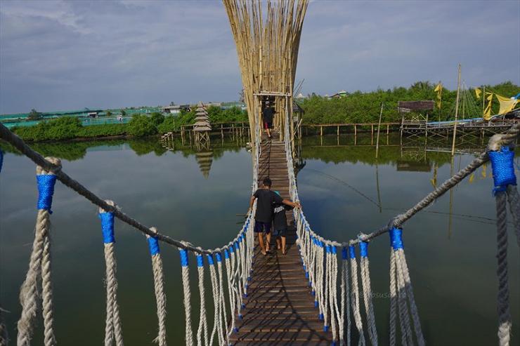 Lokasi Dan Harga Tiket Tasuk Jembatan Api Api Hutan Mangrove Kulon Progo