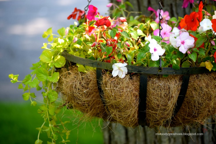 Hanging Flower Basket - Fill with impatiens and creeping Jenny - So pretty! | Ms. Toody Goo Shoes