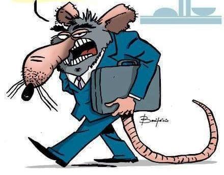 Resultado de imagem para imagem para ratazanas