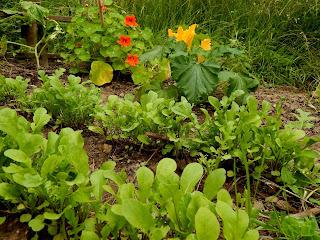 veganer Garten