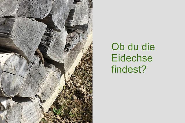 Eidechse in Holzbeige