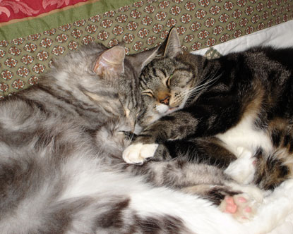 Two tabby cats sleeping