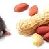 Cientistas desenvolvem uma vacina contra a alergia ao amendoim que funcionou em ratos